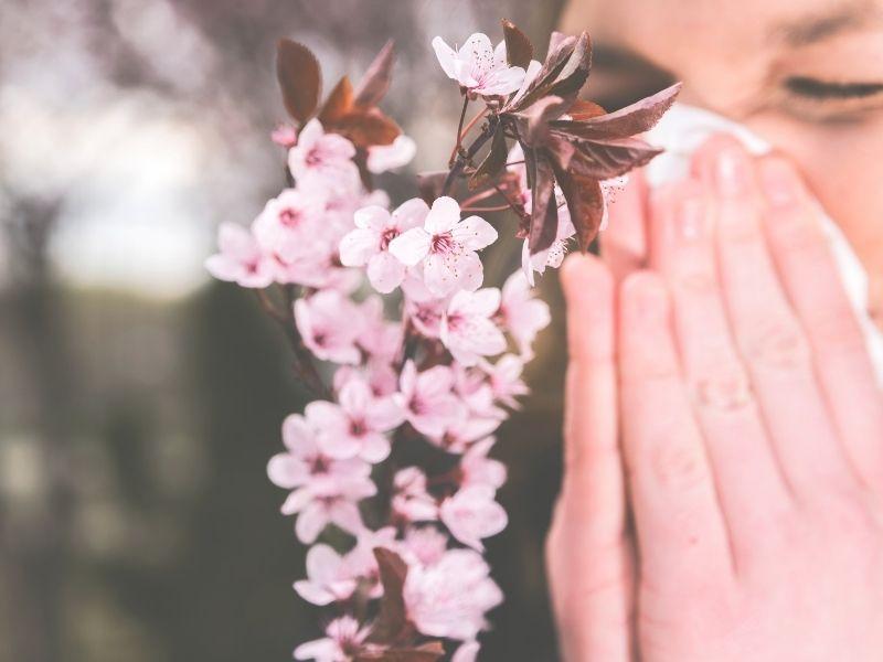 Las gramíneas producen alergia al polen