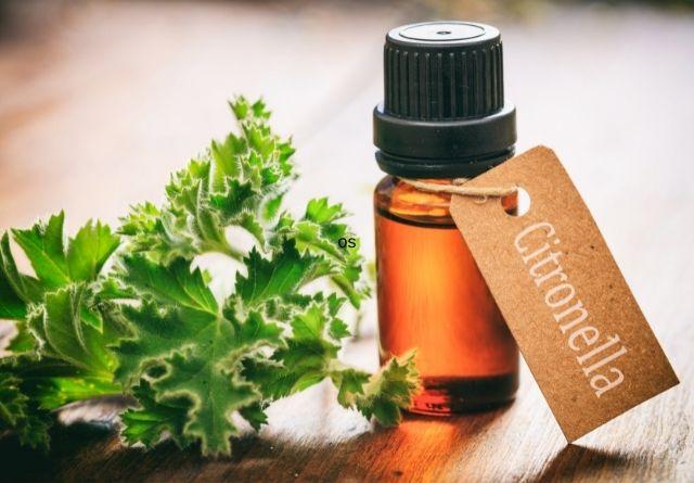 El aceite de citronela tiene numerosos usos.